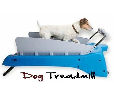 Dog exercise treadmill